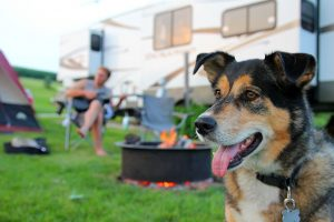 8 Tips For RVing With Dogs