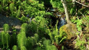 Rose Creek Retreat: Rosburg, Washington