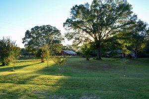 Stillwaters Farm: Henderson, Tennessee