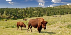 Broken Arrow Horse & RV Campground: Custer, South Dakota