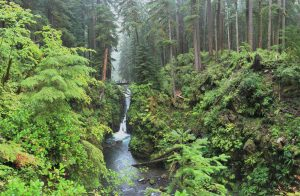 5 Must-See Places In Olympic National Park